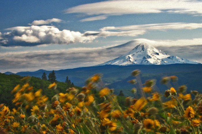 4) Rowena Crest at Tom Mccall Point, Mt Hood