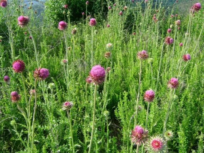 6. Scotts County Native Plants Arboretum
