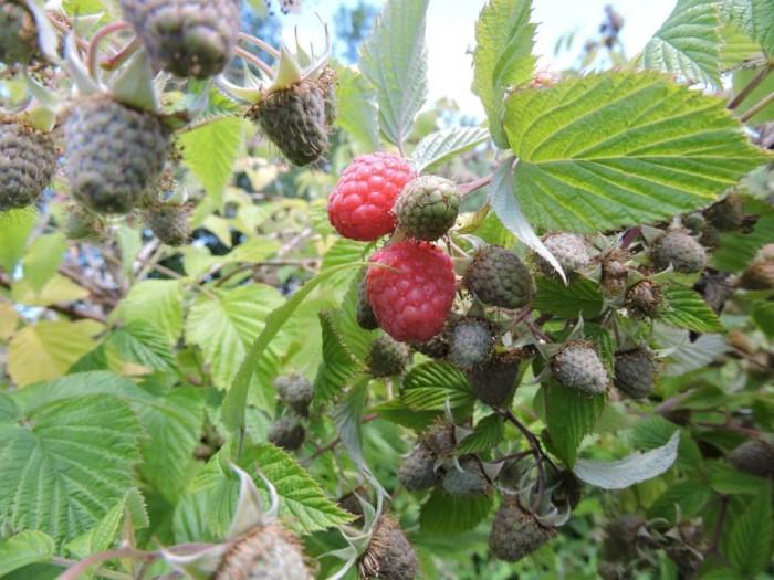 3) Sunset Valley Organics/Wilt Farm, Corvallis