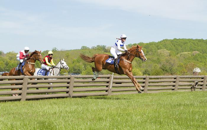 The Plains Horse