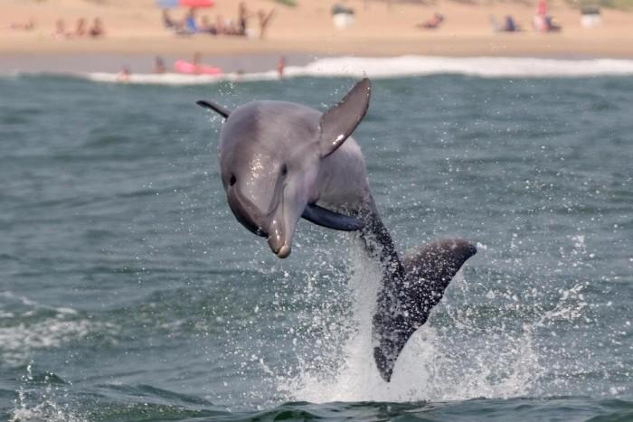 Virginia Aquarium dolphin
