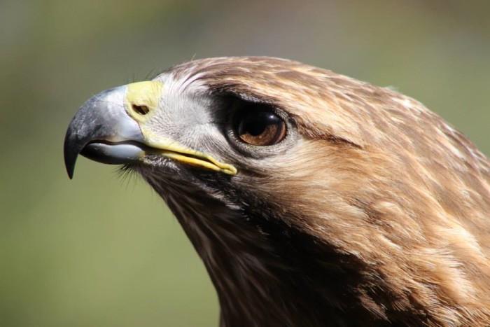 4. Woodford Cedar Run Wildlife Refuge, Medford