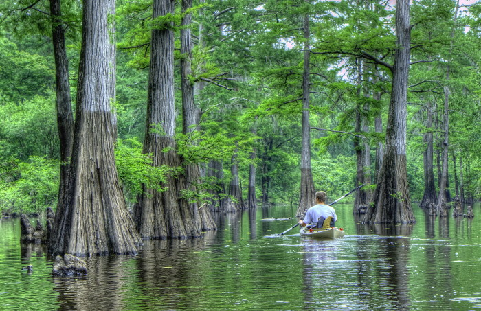 8) People from Louisiana are at home in the water.
