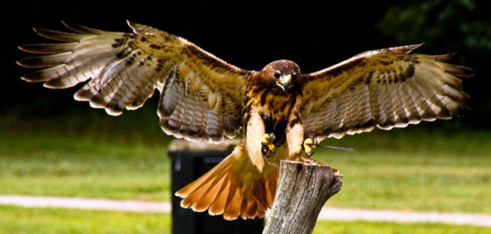 birds-of-prey-1-resized