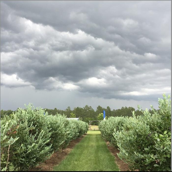 7) Blue Harvest Farms