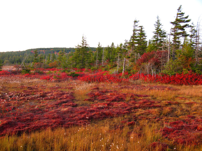7. Breathed Mountain Loop in the Dolly Sods Wilderness