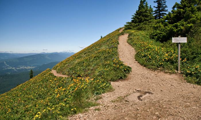 19. Dog Mountain Trail