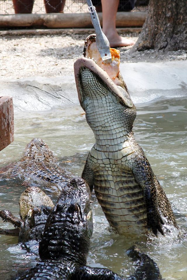 5. Arkansas Alligator Farm & Petting Zoo
