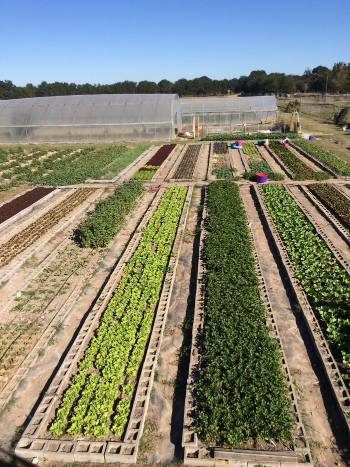 10) Gotreaux Family Farms