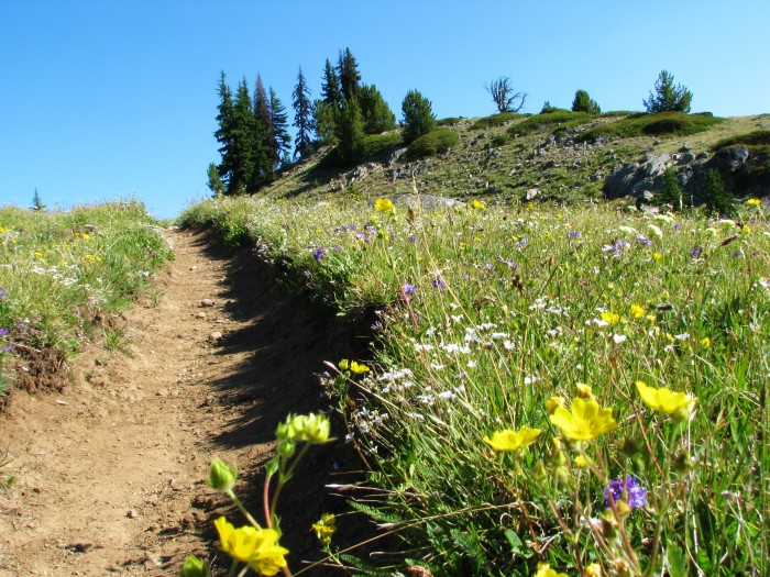 13. Horseshoe Basin Trail