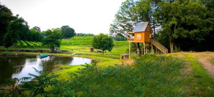 7. Treehouse Vineyards, Monroe