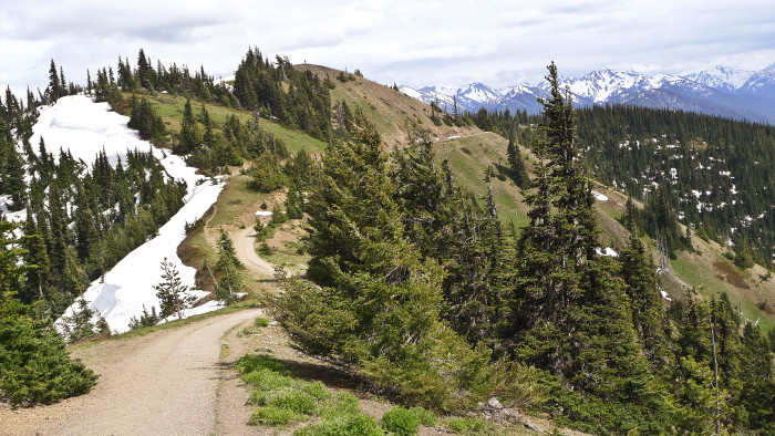 11. Hurricane Ridge Trail