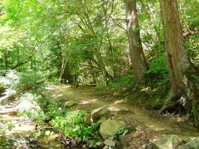 3. Overlook Rock Trail at Kanawha State Forest