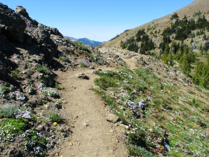 10. Marmot Pass Trail