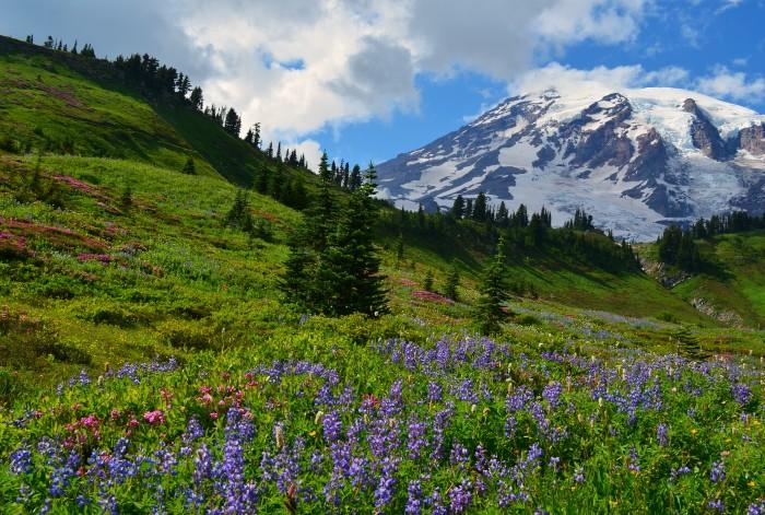 9. Mt. Rainier National Park