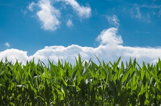 1. One word: Corn.