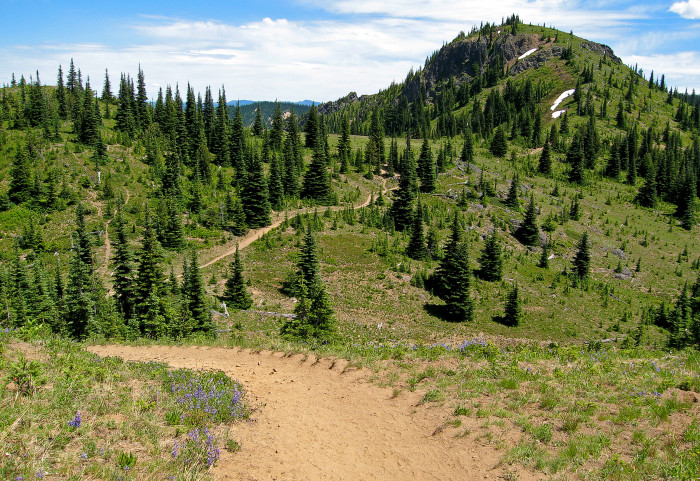 9. Noble Knob Trail