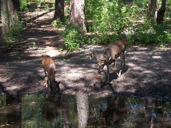 9) Oatland Island Wildlife Center of Savannah
