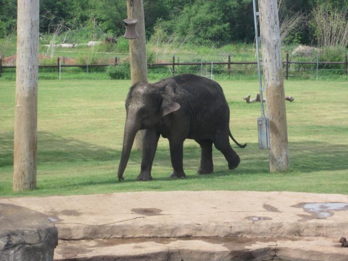 5. Oklahoma City Zoo: Oklahoma City