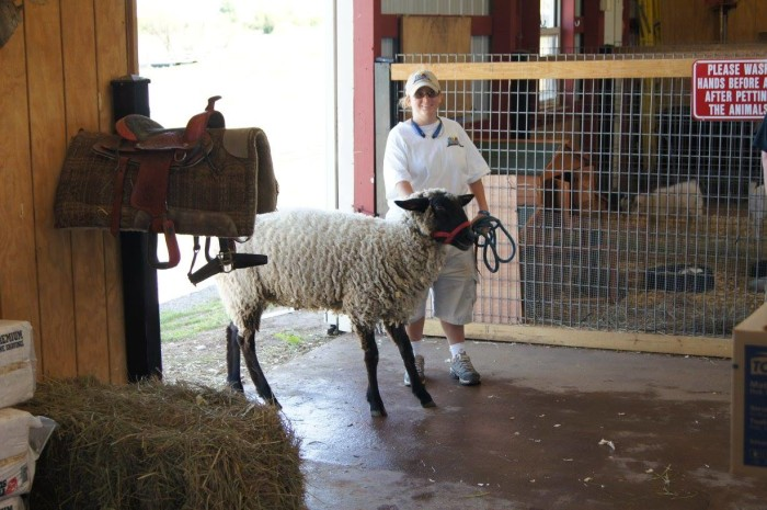 6. Orr Family Farm: Oklahoma City