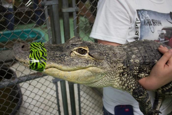 7. Safari Joe's Exotic Wildlife: Adair