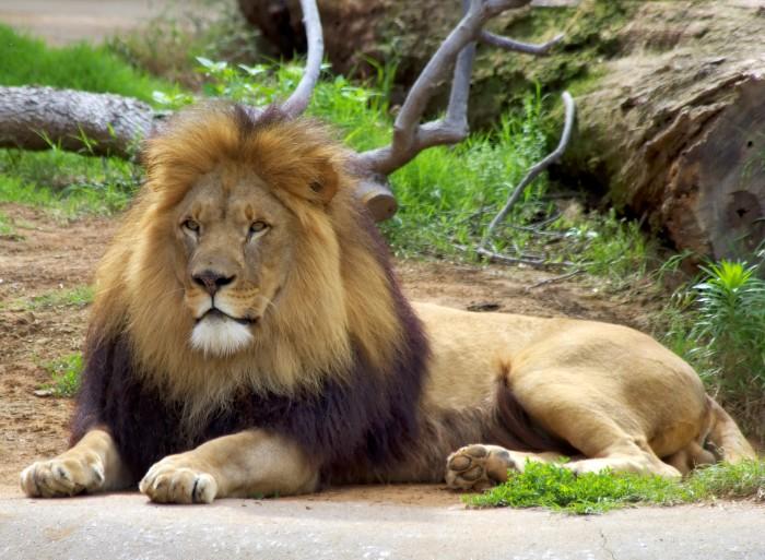 9. Tulsa Zoo: Tulsa
