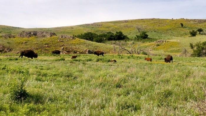 10. Wichita Mountains Wildlife Refuge:  Indiahoma