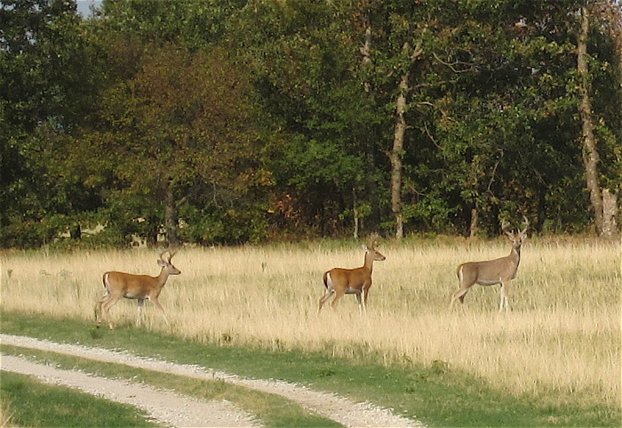 1. Deer can cause accidents or damage to you and your vehicle.