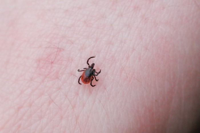 3. Blood-sucking ticks could give you diseases.