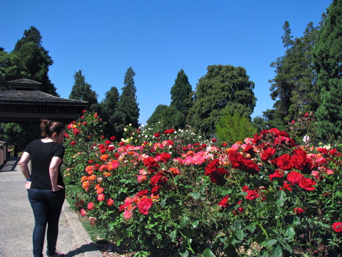 Most Beautiful Rose Gardens In The World beautiful gardens in washington