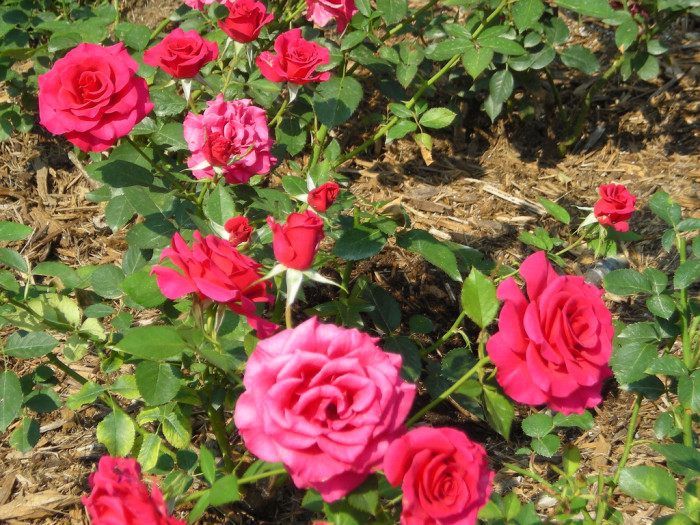 Most Beautiful Rose Gardens In The World the 6 most beautiful gardens and arboretums in west virginia