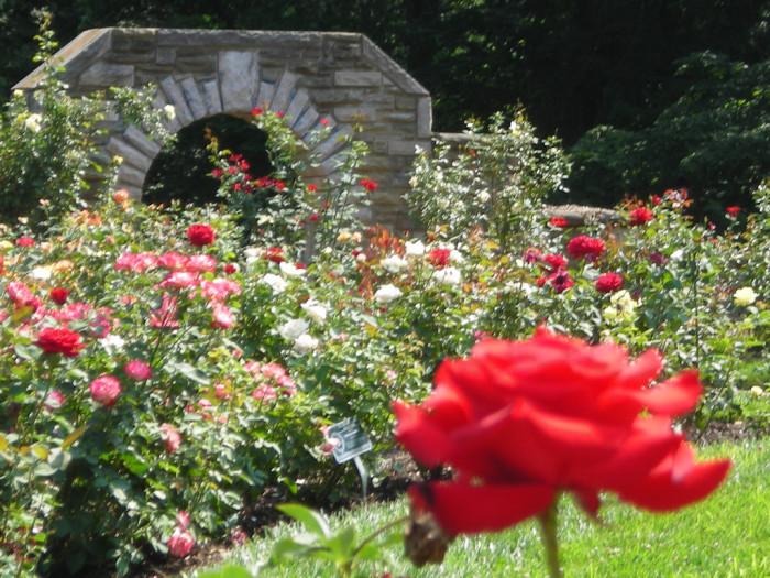 9. The Ritter Park Rose Garden