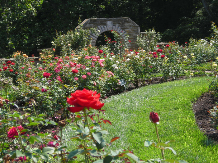 melissa cuppettflickr - Most Beautiful Rose Gardens In The World