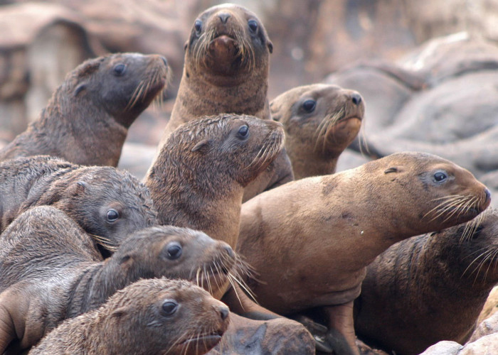 3) Sea Lion Caves