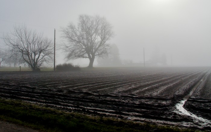 2. This scene in Skagit Valley looks like it came straight out of a horror movie.