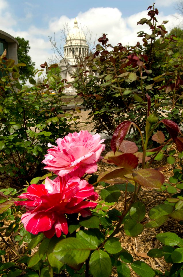 10. The State Capitol Rose Garden