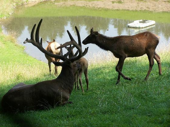 11. See live animals at the West Virginia Wildlife Center