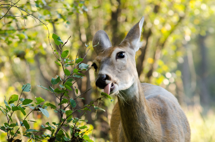 7. You're an expert at watching out for deer in the roadway.