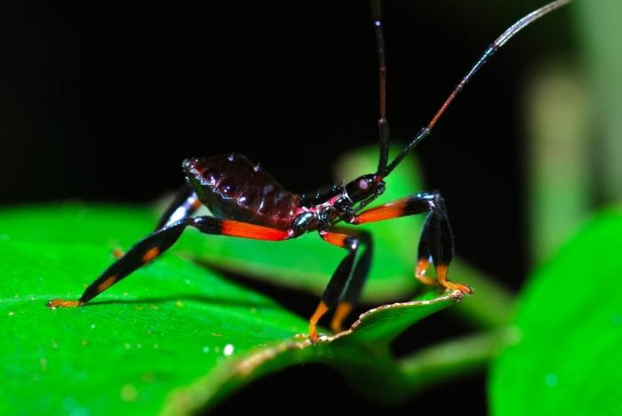 3. Assassin Bug
