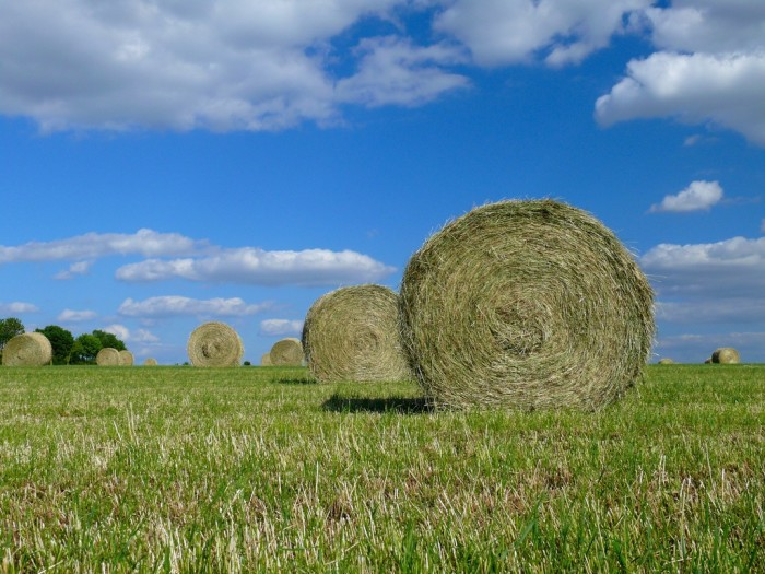 2. Why do people from Illinois freak out over these straw wheels?