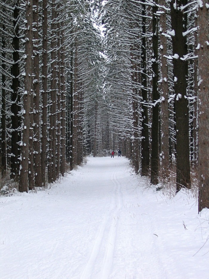 5. Nordic Trail (Whitewater)