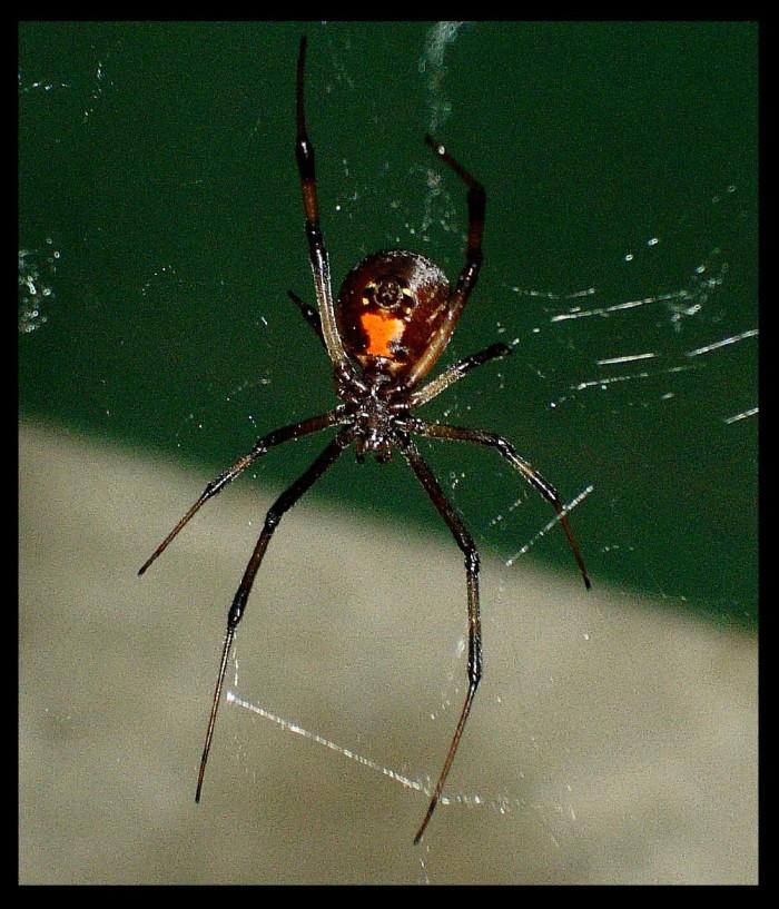 4. Black Widow