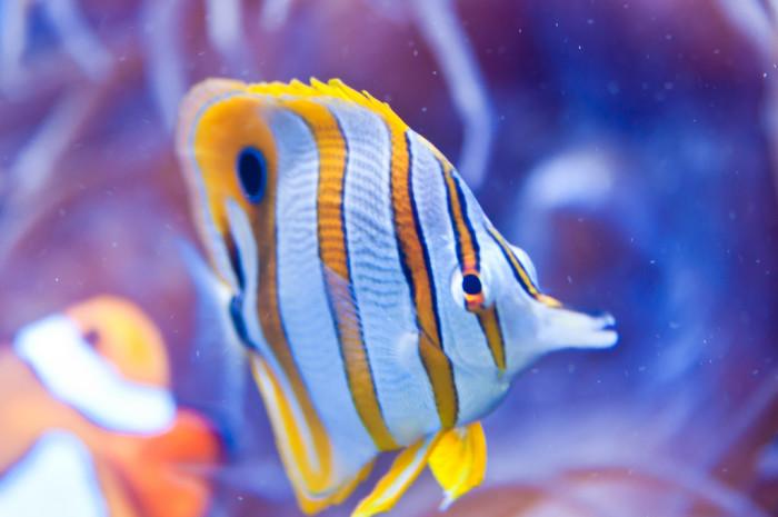 1) Waikiki Aquarium, Oahu