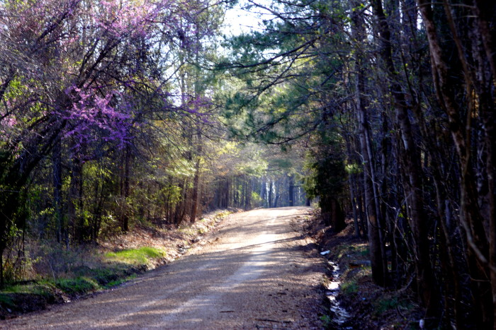 10. This country road in Starkville looks ideal for a relaxing Sunday drive.