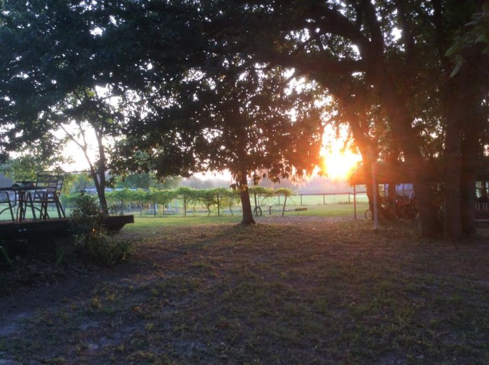8. BlueBela Farm, High Springs