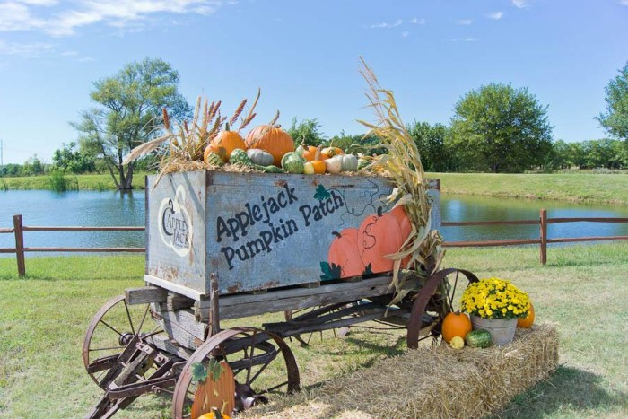 3. Applejack Pumpkin Patch (Augusta)