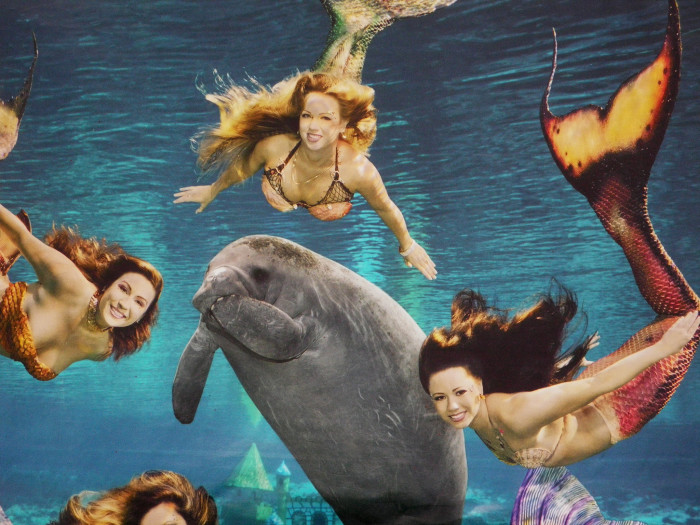 3. We have real mermaids (and manatees).