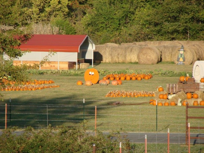 5. Wood Farms Pumpkin Patch (Pittsburg)