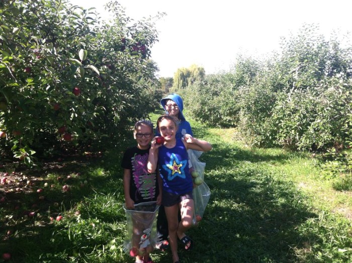 3. Kiraly's Orchard