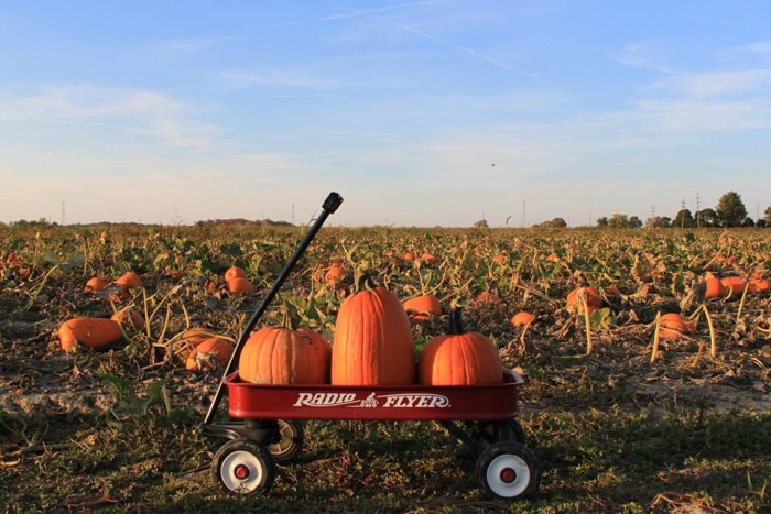14. Tuttle Orchards (5717 N 300 W, Greenfield)